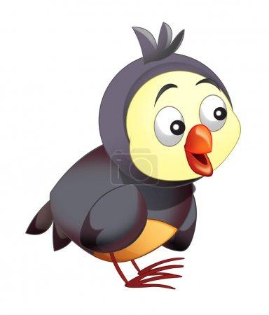 Cartoon funny colorful bird