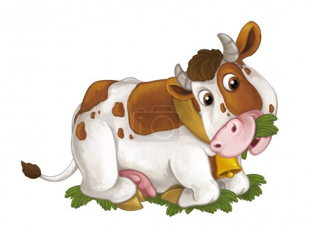 cow is lying down resting, looking and eating grass