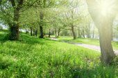 bright summer forest with sunlight at sunny day, beautiful landscape, green grass and trees