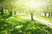 bright summer forest at sunny day, beautiful landscape, green grass and trees
