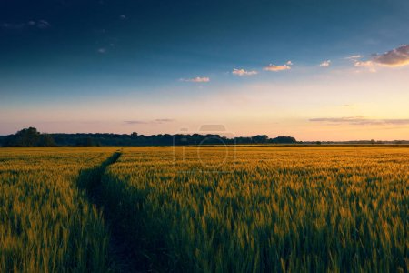Beautiful sunset in field with footpath, spring la...