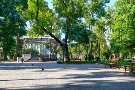 Photo pour Parc municipal en été, ensoleillé, arbres verts et ombres - image libre de droit