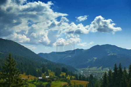 Photo pour Beau paysage estival, épicéas sur les collines, ciel nuageux et fleurs sauvages destination de voyage pittoresque, montagnes carpates - image libre de droit