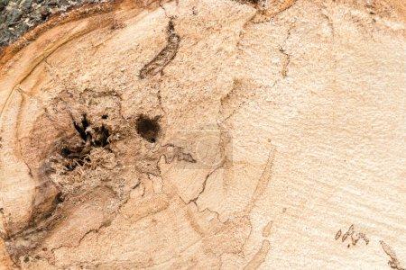 Photo pour Fermer le tronc d'arbre fraîchement coupé. fond en bois . - image libre de droit