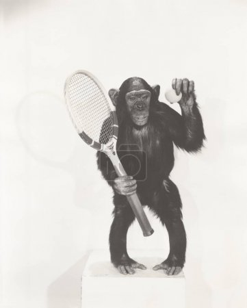 Monkey holding tennis racket