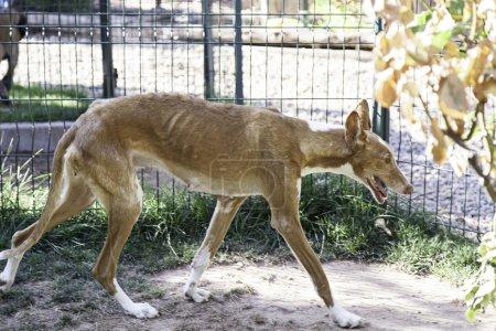 Photo pour Chien chenil maltraité dans mince, animal abandonné - image libre de droit