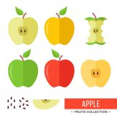 Apple Yellow green red whole apples and parts slices seeds leaves core Set of fruits Flat design graphic elements Vector illustration