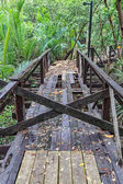 Abandoned Wooden Walkway in Mangrove Forest