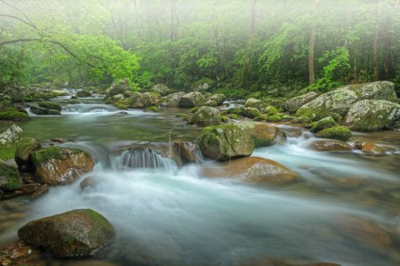 Photo for Foggy summer landscape of a cascade on Big Creek captured with motion blur, Great Smoky Mountains National Park, Tennessee, USA - Royalty Free Image