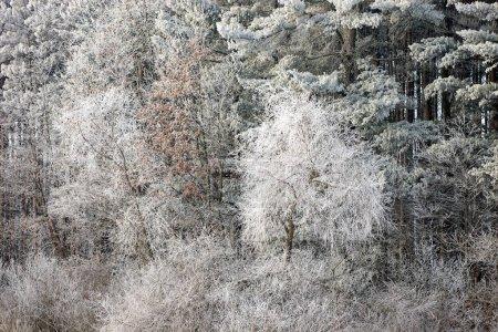 Photo pour Paysage hivernal de givre blanc recouvrant les arbres sur le rivage du lac Crooked, Michigan, États-Unis - image libre de droit