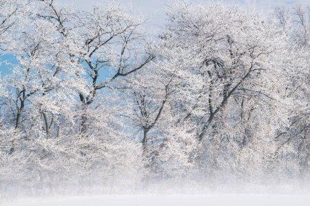 Photo pour Hoarfrost entoure une forêt d'arbres nus dans le brouillard par un matin d'hiver glacial, Michigan, États-Unis - image libre de droit