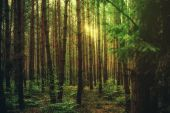 Magic sun light in the forest, nature background