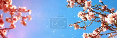 Abstract blurred banner of spring cherry tree