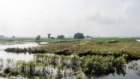 Photo pour Horizon vert luxuriant d'un champ agricole d'un petit village indien dans l'air chaud et humide pendant la saison des pluies torrentielles de la mousson du sud-ouest. Récolte dans les campagnes tropicales. Inde Asie du Sud Pac - image libre de droit