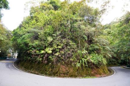 Kinabalu Park in Sabah, Malaysia