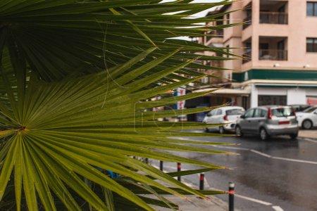 Photo pour Foyer sélectif de feuilles vertes et fraîches près du bâtiment - image libre de droit