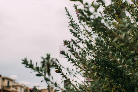 Photo for Selective focus of green leaves on branches against cloudy sky - Royalty Free Image