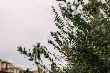 Photo pour Foyer sélectif des feuilles vertes sur les branches contre ciel nuageux - image libre de droit