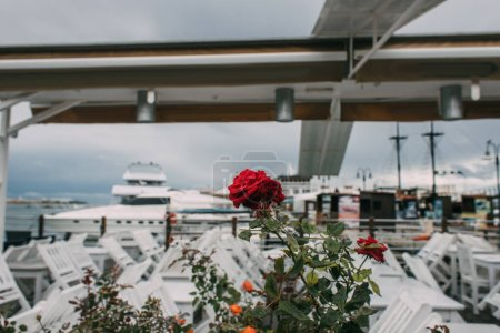 Photo pour Foyer sélectif de fleurs en fleurs près des tables et des chaises sur la terrasse du restaurant - image libre de droit