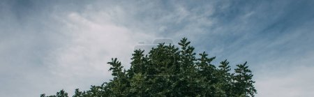 Photo for Panoramic shot of green leaves on branches against blue sky - Royalty Free Image