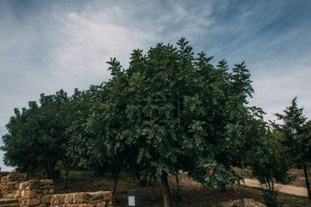 Foto de Hojas verdes y frescas sobre árboles contra el cielo azul y las nubes - Imagen libre de derechos