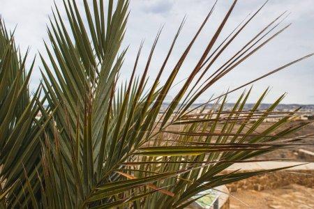Photo pour Soleil près de feuilles de palmier vertes et fraîches - image libre de droit