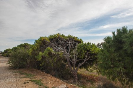 Photo for Trees with fresh leaves against sky and clouds - Royalty Free Image