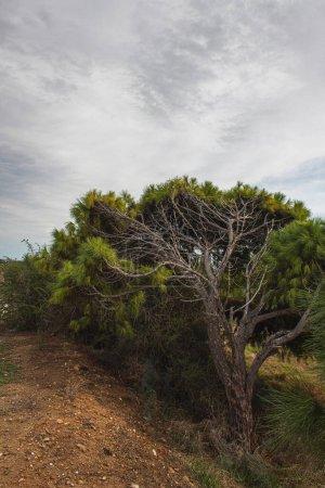 Photo pour Arbre aux feuilles fraîches contre ciel et nuages - image libre de droit