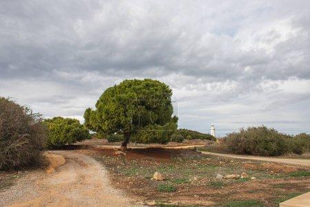 Photo pour Sentier près des arbres verts et de l'ancien phare en paphos - image libre de droit