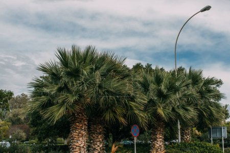 Photo for Green palm trees near road sign against blue sky with clouds - Royalty Free Image