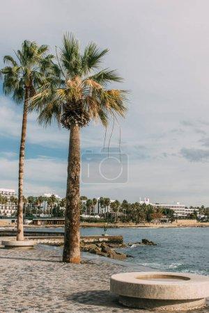 Photo pour Lumière du soleil sur les tés verts de palmier près de la mer contre le ciel bleu avec des nuages - image libre de droit