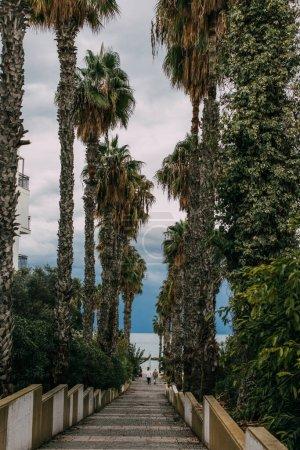 Photo pour Vue arrière de deux personnes marchant sur une allée de promenade avec des palmiers verts - image libre de droit