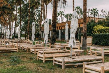 Photo pour Palmiers verts près de chaises longues en bois et parasols extérieurs - image libre de droit