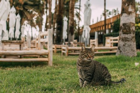 Photo pour Foyer sélectif du chat assis sur l'herbe près des chaises longues - image libre de droit
