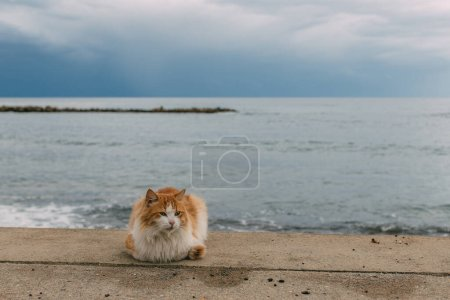 Photo for Cute cat lying on ground near mediterranean sea - Royalty Free Image