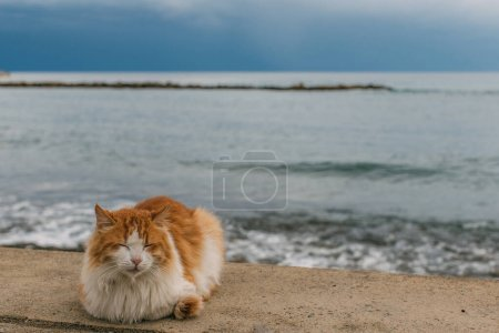Photo for Cute cat with closed eyes lying on ground near mediterranean sea - Royalty Free Image