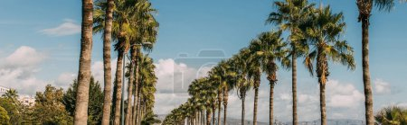 panoramic shot of promenade alley with green palm trees against blue sky