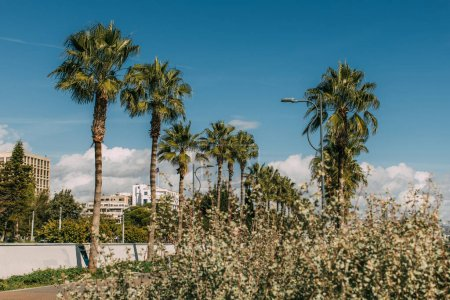 Photo for Selective focus of green palm trees against blue sky - Royalty Free Image