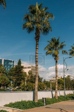 Photo pour Ensoleillement sur les palmiers verts près des bâtiments dans la ville - image libre de droit