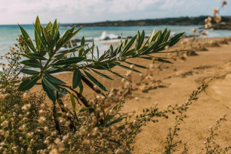 selective focus of green leaves on plants near mediterranean sea