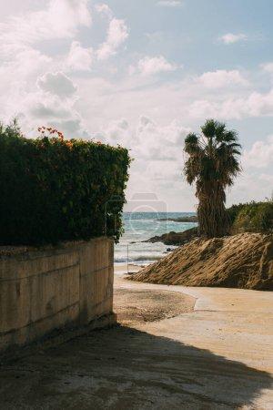 Photo pour Plantes vertes et palmier près de la plage de sable et de la mer Méditerranée - image libre de droit