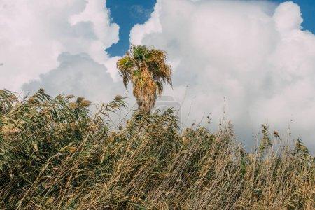 Photo pour Plantes et palmier vert contre le ciel avec des nuages blancs - image libre de droit