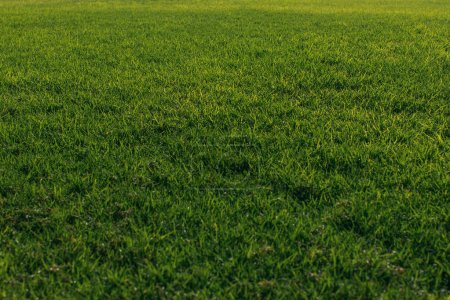 Photo for Green and fresh grass in summertime - Royalty Free Image