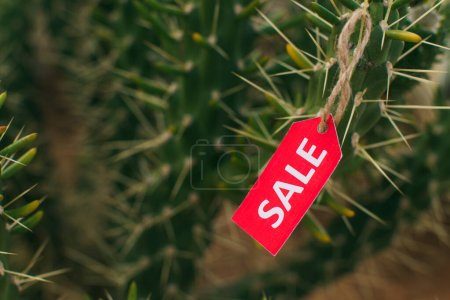close up of red tag with sale lettering on cactus