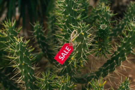 Photo for Selective focus of red tag with sale lettering on cactus - Royalty Free Image