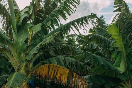 Photo pour Feuilles de palmier vert et frais contre le ciel - image libre de droit