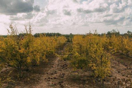 Photo pour Arbres aux feuilles jaunes contre ciel gris avec nuages - image libre de droit