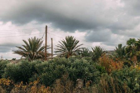 Photo pour Feuilles fraîches et vertes sur les palmiers contre le ciel gris et nuageux - image libre de droit
