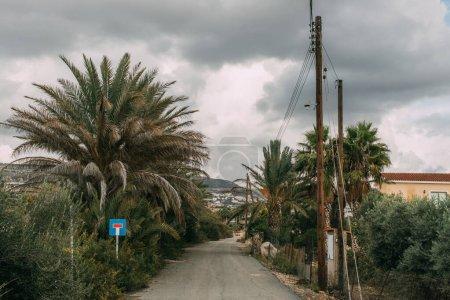 Photo pour Feuilles vertes sur les palmiers près de la route contre un ciel gris et nuageux - image libre de droit