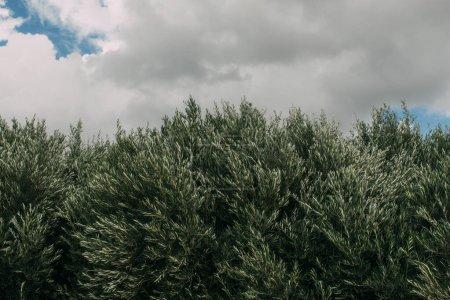 Photo pour Plantes fraîches et vertes contre le ciel avec des nuages - image libre de droit